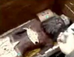 Найдена гробница курдского царя, захороненная более чем 3000 лет назад