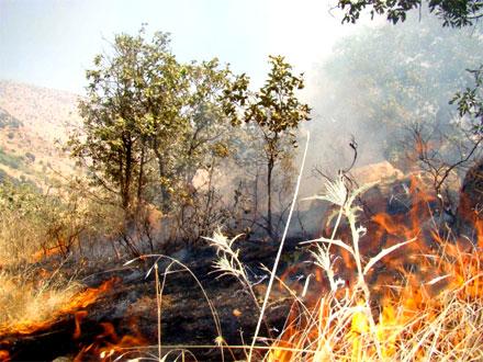 Пожар в лесной зоне территории Храма Лалиш уничтожил большое количество растительности